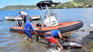 نفوق عشرات الدلافين إثر تسرب أطنان من النفط في المحيط الهندي (صور وفيديو)